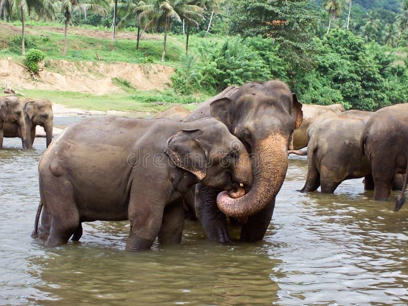 Download Стадо слонов в реке стоковое изображение. изображение насчитывающей ангстрома - 40579957
