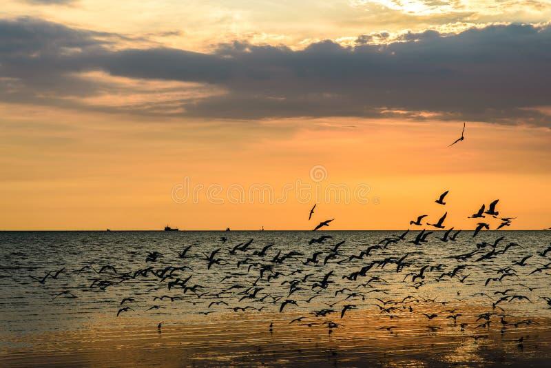 Стадо чайок в небе стоковое фото rf
