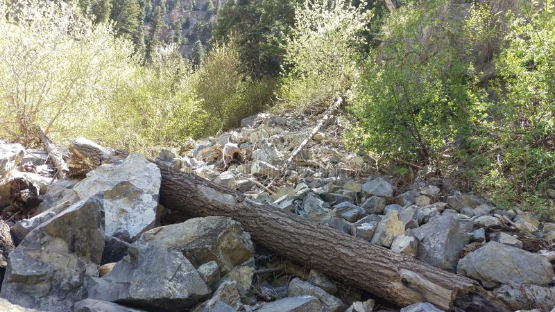 Ствол дерева и деревья в Blockfield стоковая фотография rf