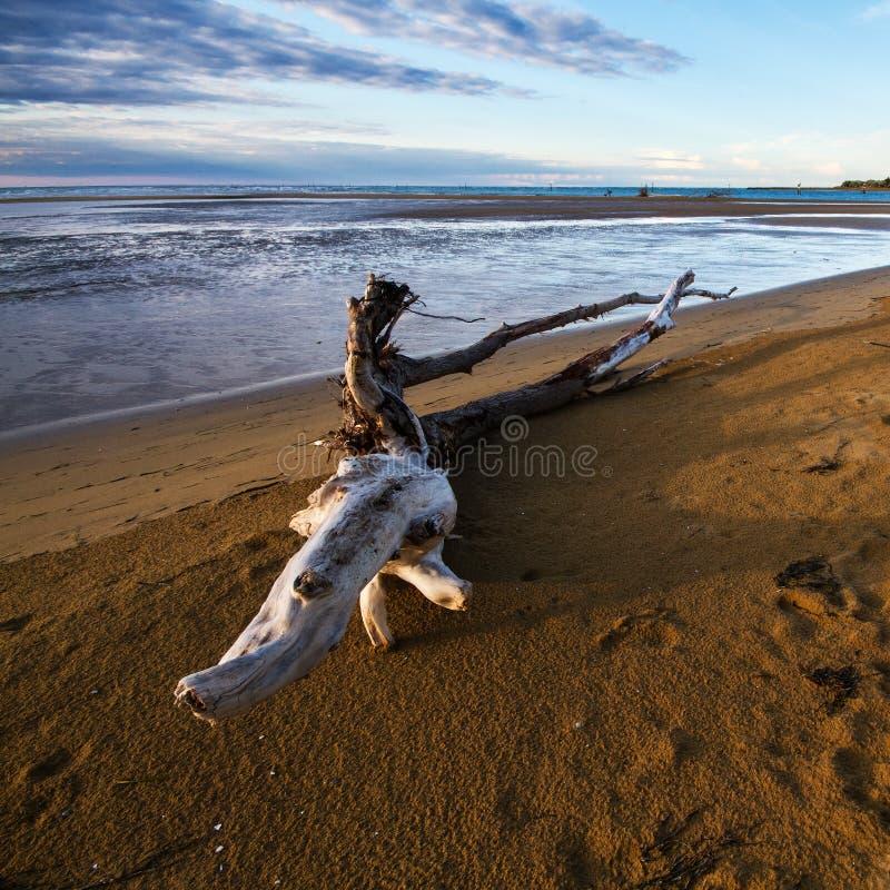 Ствол дерева на пляже стоковые фотографии rf