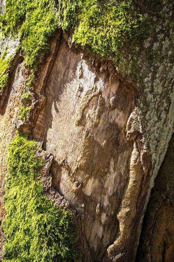Ствол дерева перерастанный с зеленой текстурой мха стоковое изображение rf