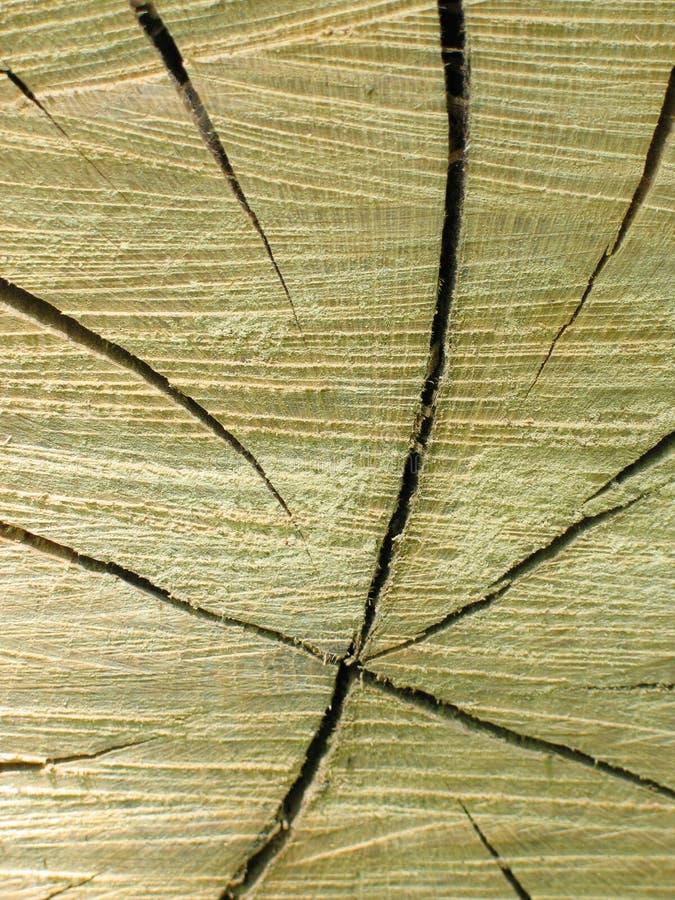 Download ствол дерева поперечного сечения Стоковое Фото - изображение насчитывающей вал, brougham: 88018