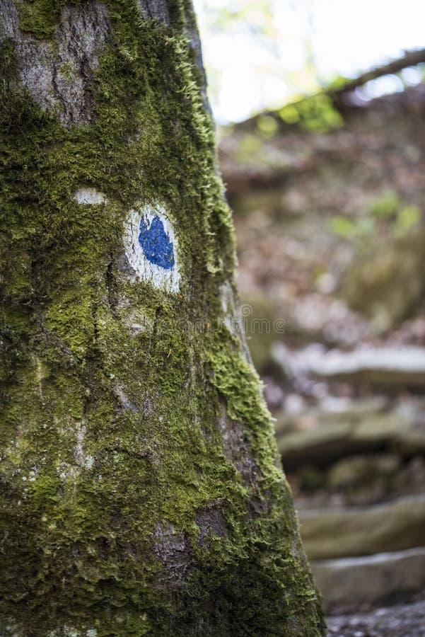 Ствол дерева рынка со свежим зеленым мхом стоковые фотографии rf