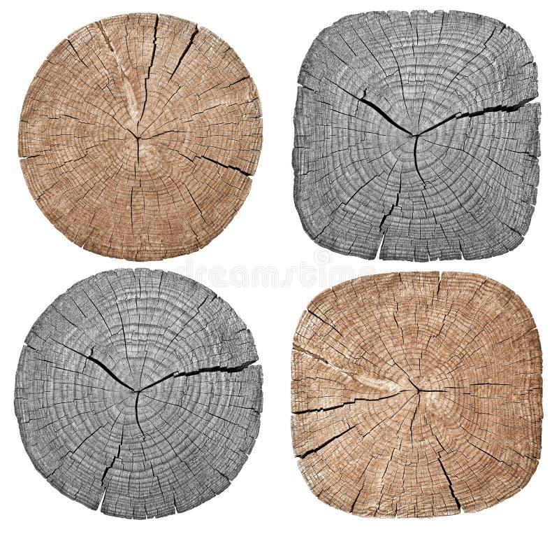 Ствол дерева показывая годичные кольца стоковое изображение
