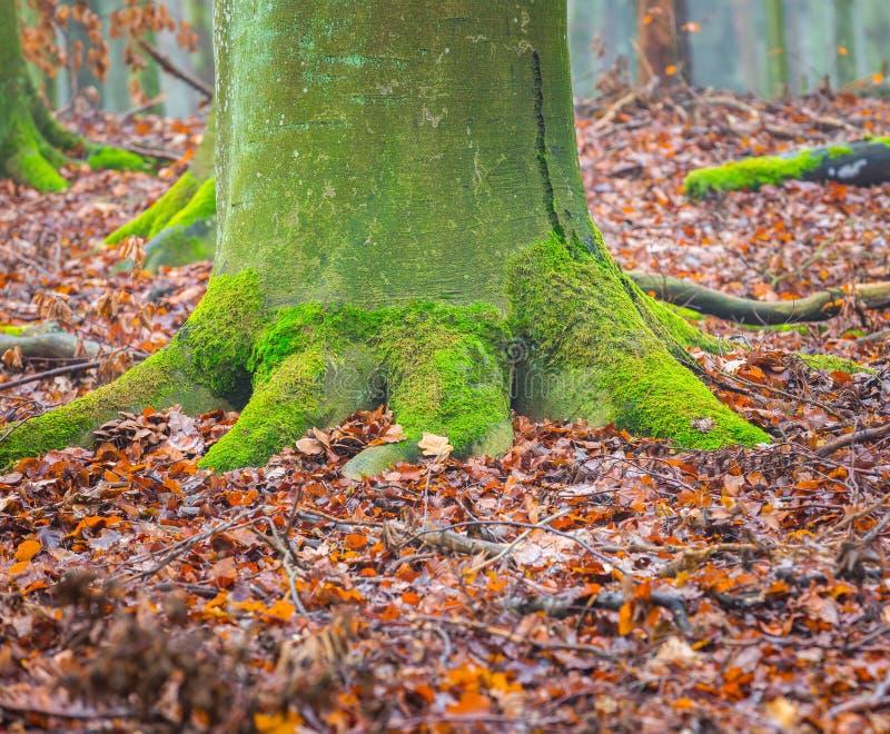 Ствол дерева покрытый зеленым мхом стоковая фотография rf
