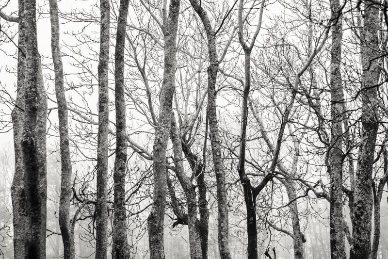 Стволы дерева и ветви против неба стоковое изображение rf