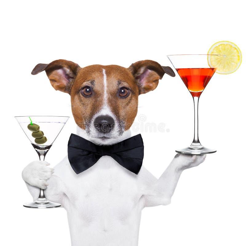 Стекла Мартини собаки коктеила стоковая фотография rf