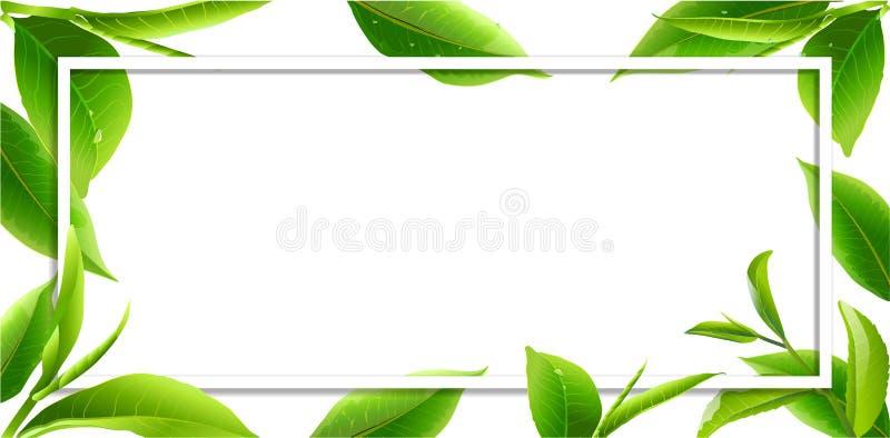Стекло выходит зеленый чай изолированный на белую предпосылку иллюстрация штока