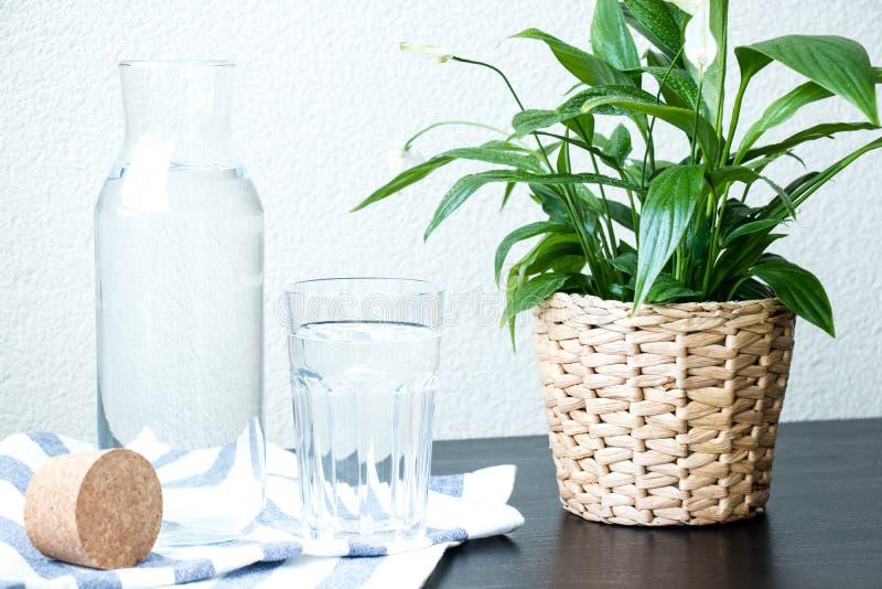 Стекло и бутылка воды, зеленого растения в баке на таблице с запачканной предпосылкой стоковое фото rf