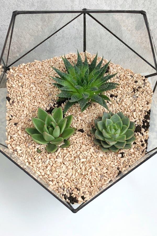 Стеклянная ваза florarium с суккулентными заводами и малым кактусом на белой таблице Малый сад с миниатюрным cactuse Домашний кры стоковая фотография rf