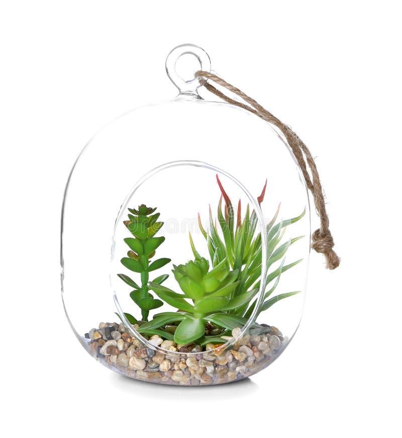 Стеклянная тара с succulents на белой предпосылке стоковое фото