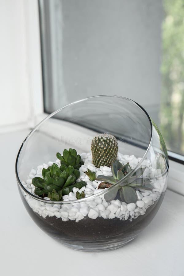 Стеклянное florarium с различными succulents на windowsill стоковое фото