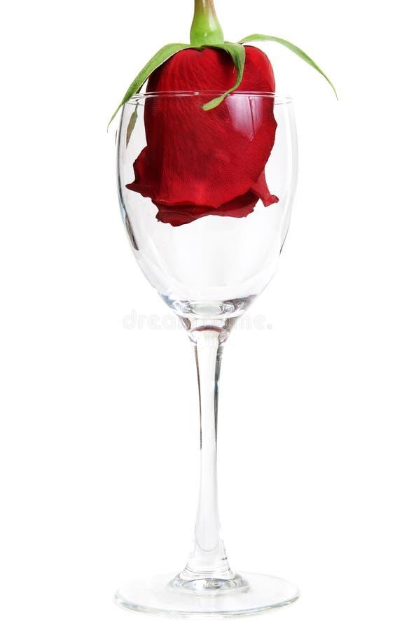 стеклянный красный цвет кубка поднял стоковые изображения rf