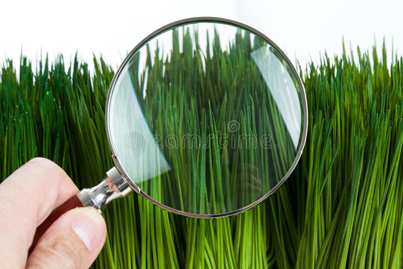 стеклянный увеличивать зеленого цвета травы стоковое изображение