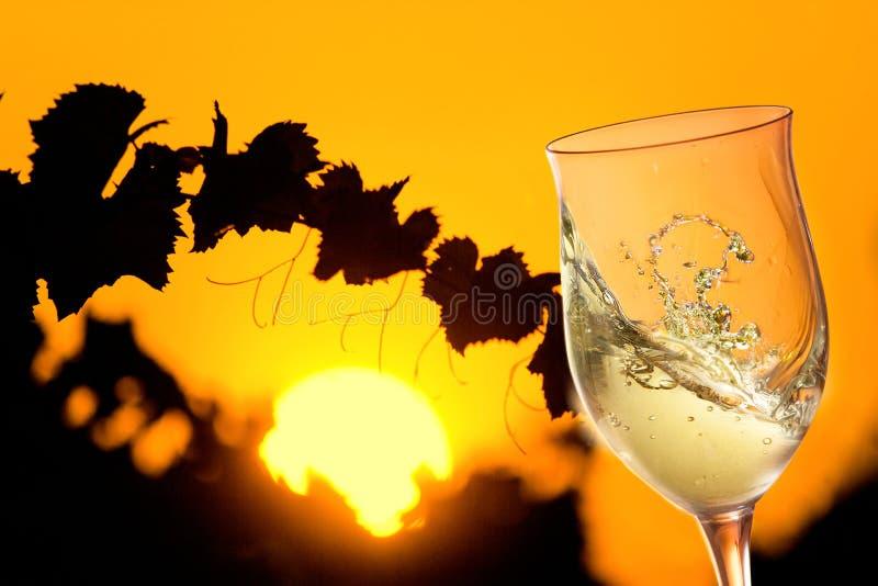 Стекло белого вина в солнечном винограднике с листьями в silouette стоковая фотография rf