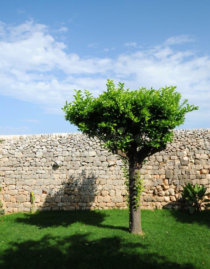 стена вала сухого камня стоковое фото rf