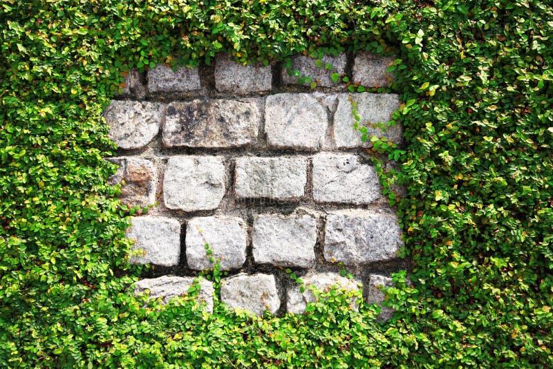 стена изгороди каменная стоковая фотография rf
