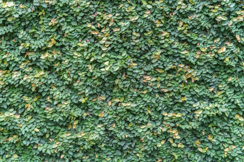 Стена листьев стоковое фото