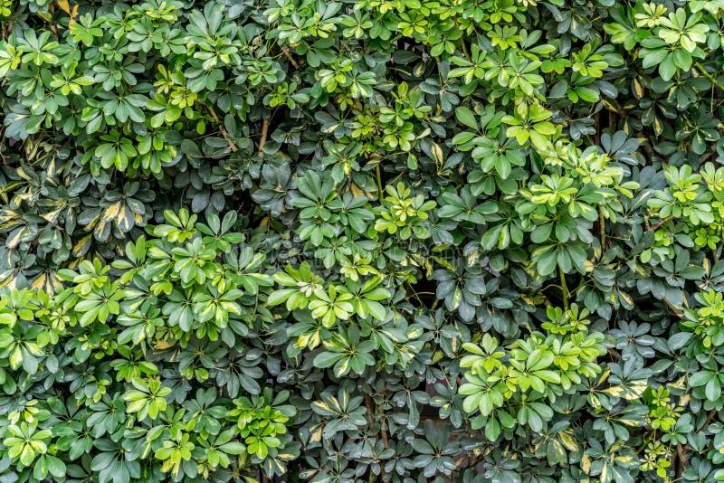 Стена листьев стоковые фото