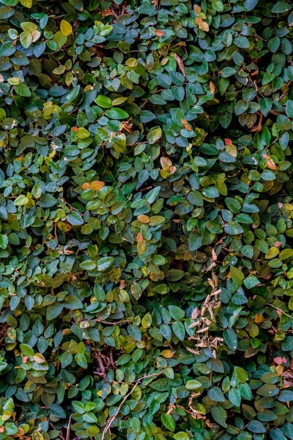 Стена листьев стоковые изображения