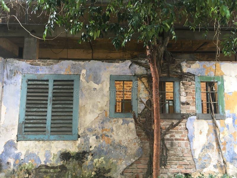 Стена и дерево стоковая фотография