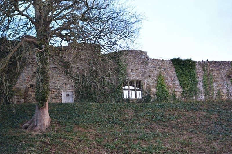 Стена и дерево замка в зиме стоковые фотографии rf