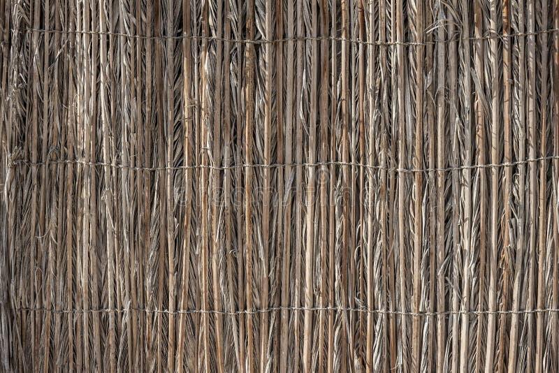 Стена камышовых черенок стоковые фотографии rf