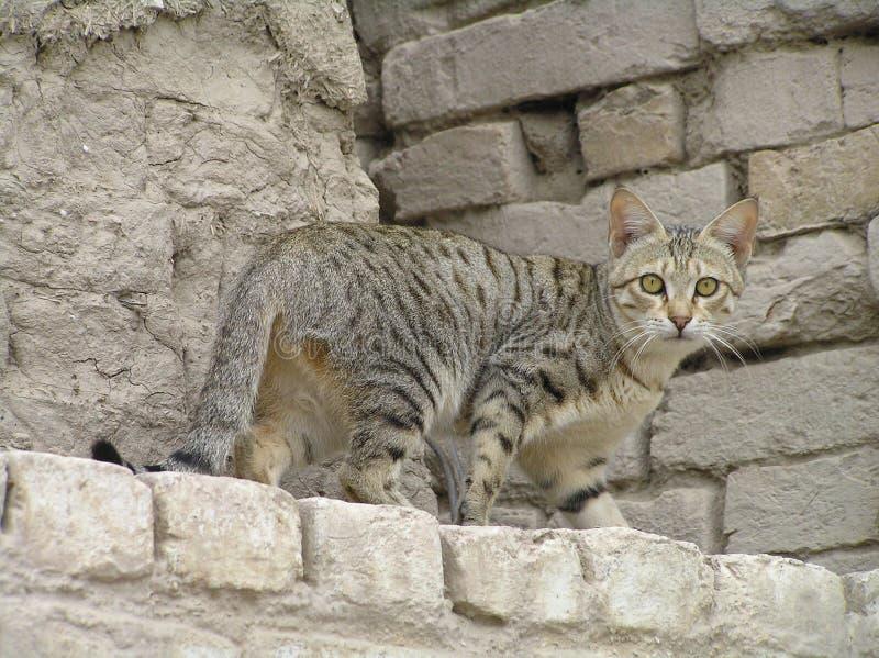 стена кота стоковые изображения