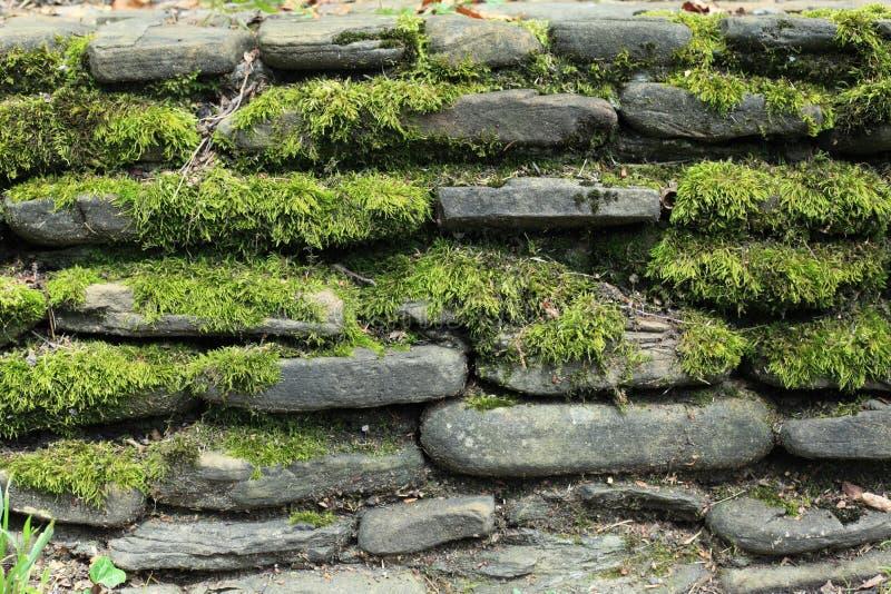 стена мха каменная стоковая фотография