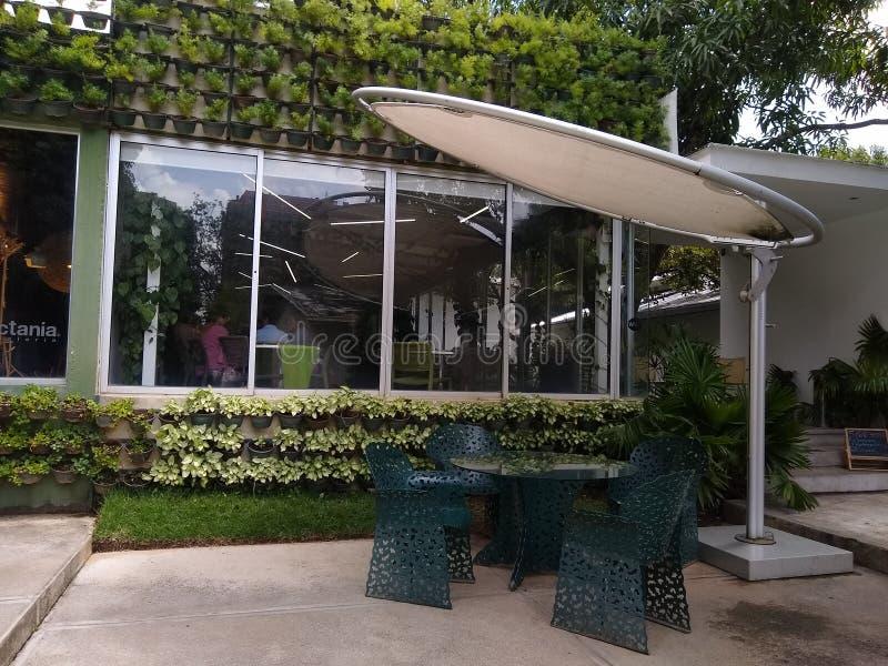 Стена, покрытая растительностью вне ресторана, зеленая концепция климатически благоприятная стоковые изображения
