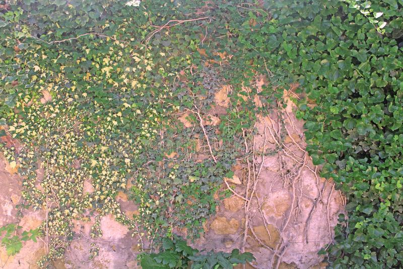 Стена поля стоковое фото rf