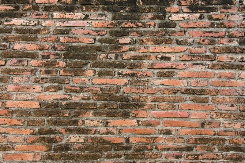 стена сада фронта цветка кирпича коричневая стоковое фото rf