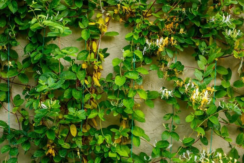 Стена с листьями заводов r стоковые фотографии rf