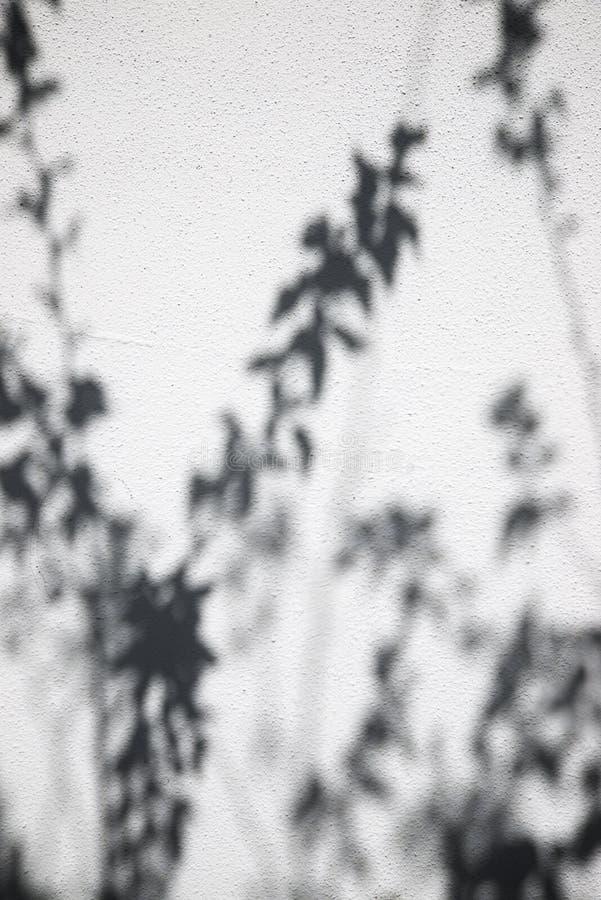 Стена с тенями стоковые фото