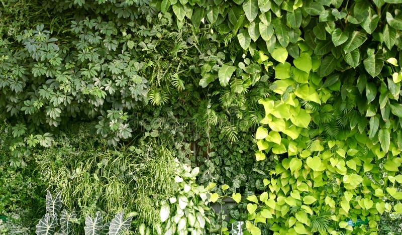Стена с тропическими растениями Климатические заводы Зеленый фон природы стоковая фотография rf