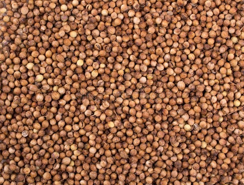 стена текстуры кирпича предпосылки старая Сухие семена кориандра стоковая фотография