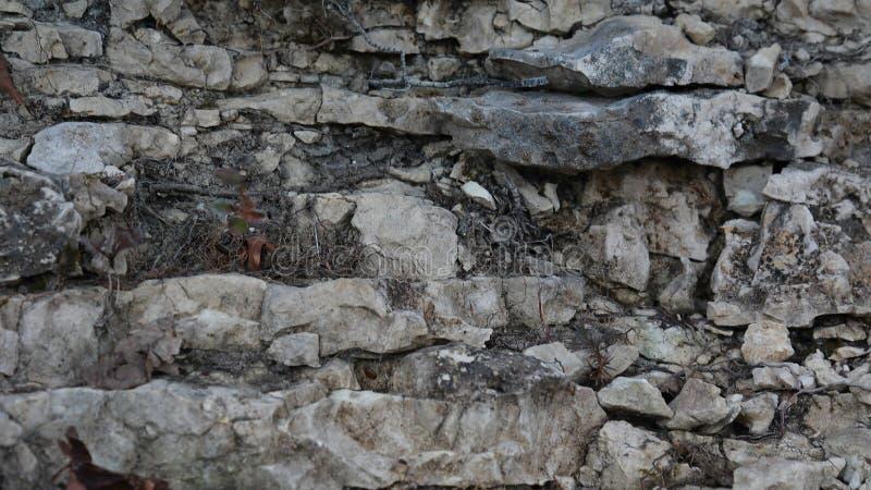 Стена утеса на пути леса стоковая фотография