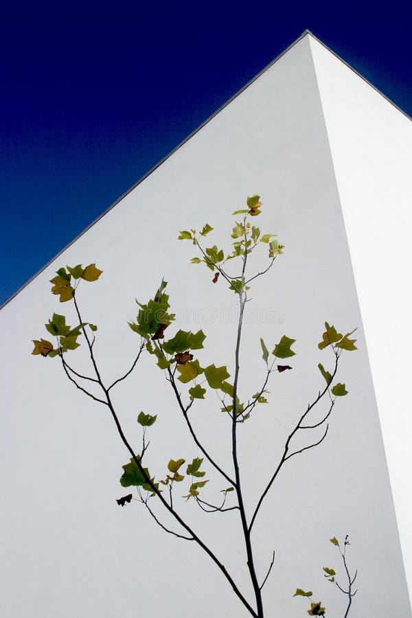 стена стоковое фото