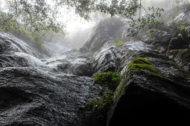 Стены дождевого леса стоковые изображения rf