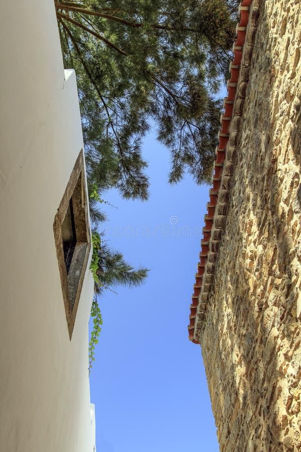 2 стены и дерева стоковая фотография