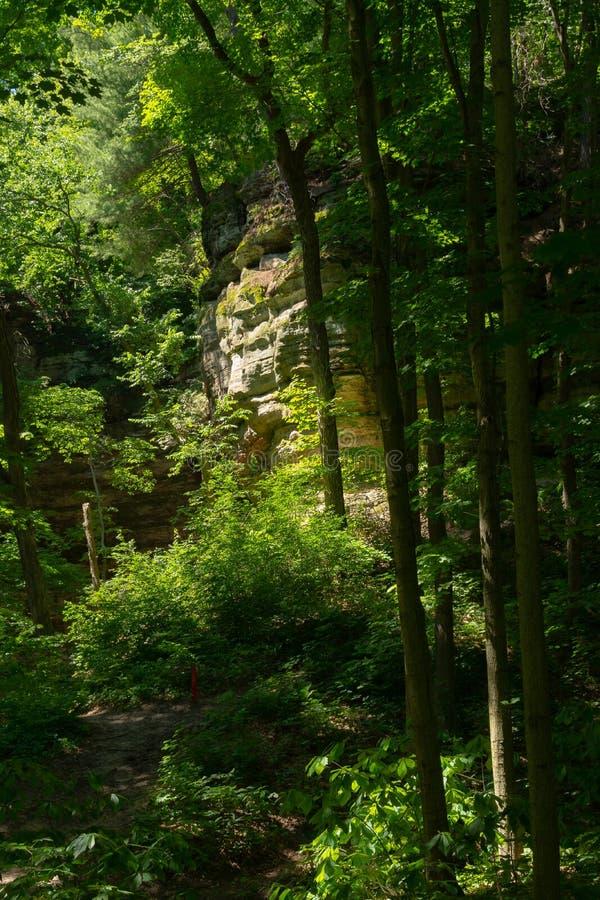 Стены каньона через деревья стоковые изображения