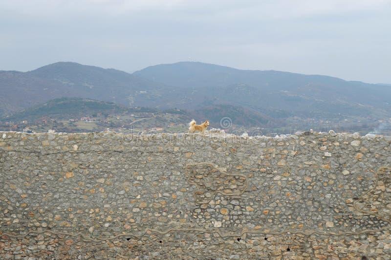 Стены окружая крепость короля Samuil в Ohrid стоковые изображения