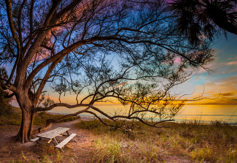 Стенд пикника под деревом на ключе Manasota стоковое фото rf