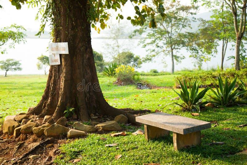 Стенд под деревом. стоковая фотография rf