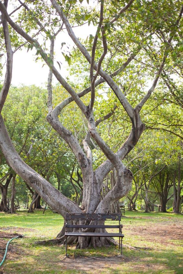 Стенд под деревом стоковая фотография rf