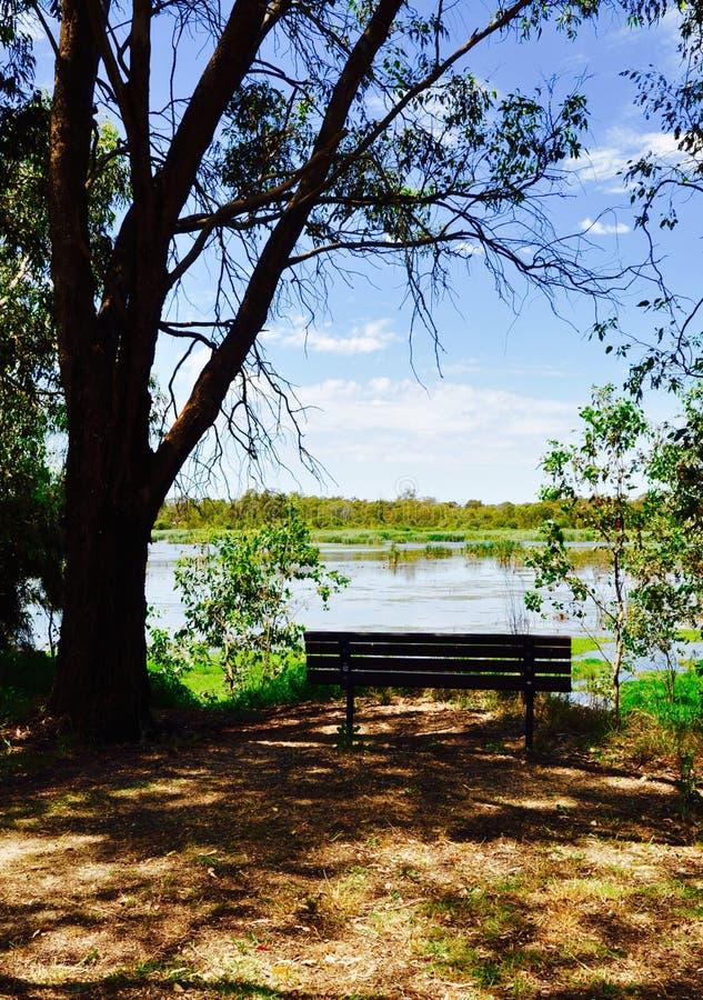 Стенд просмотра: Заболоченные места озера Bibra стоковое фото rf
