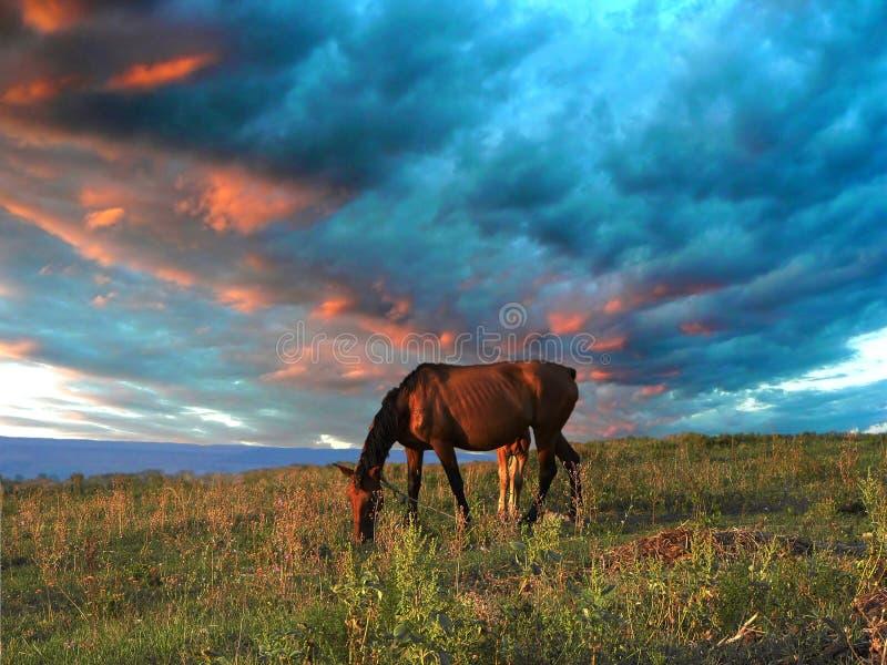 степь лошадей стоковое изображение rf