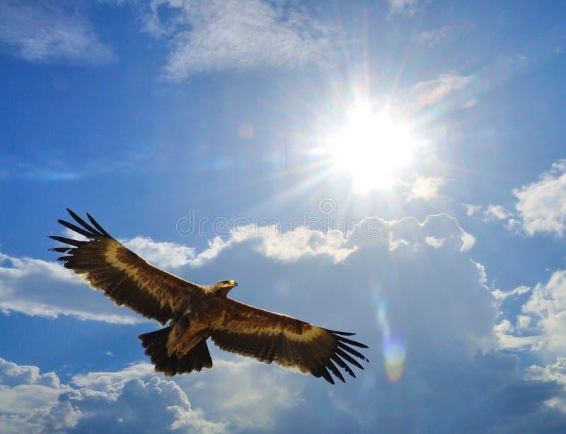 степь rapax prey nipalensis орла птицы aquila самая лучшая стоковое изображение rf