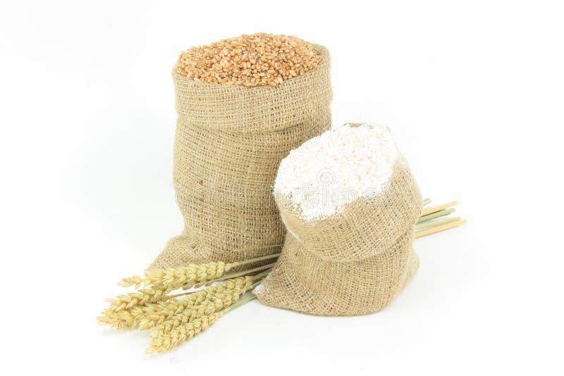 стержень муки засаживает пшеницу стоковое изображение rf