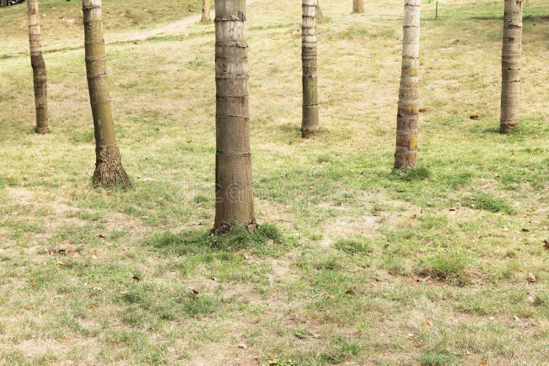 стержень стоковое изображение